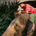 Elefántkaland Thaiföldön