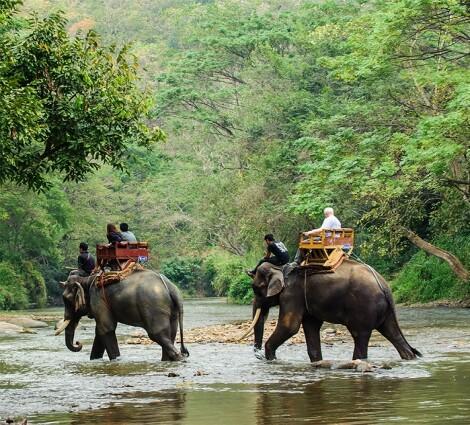Elefánháton a dzsungelben